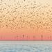 Brighton Starlings and Rampion Wind Farm by lomokev