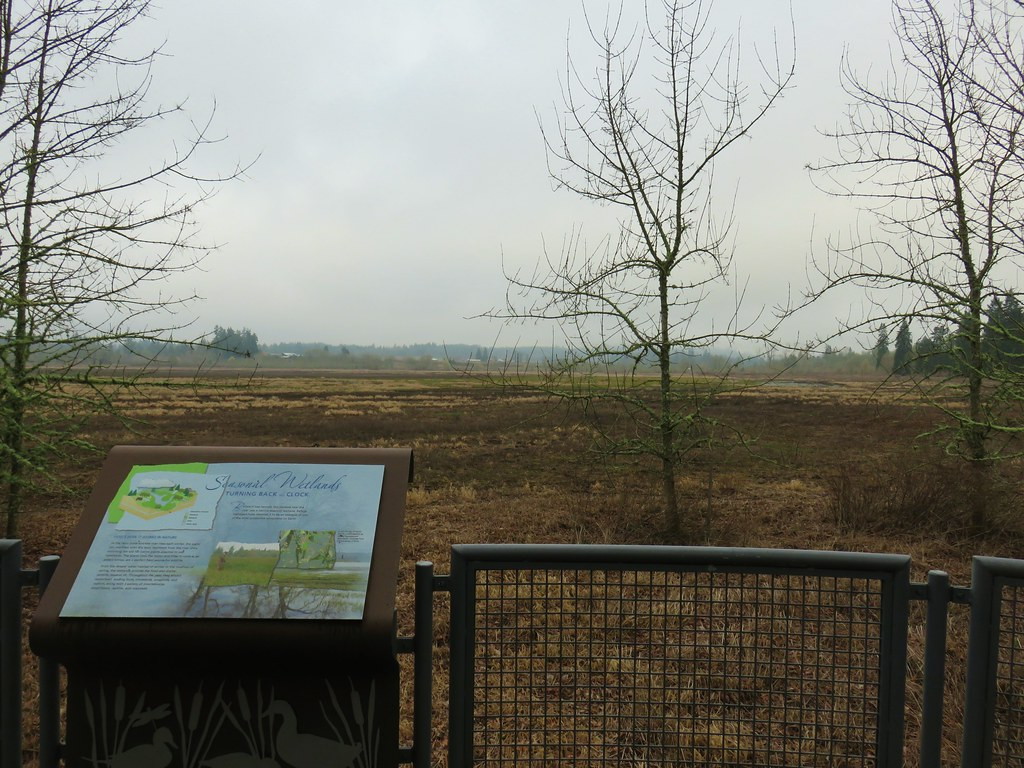 View from the Wetlands Observation Deck