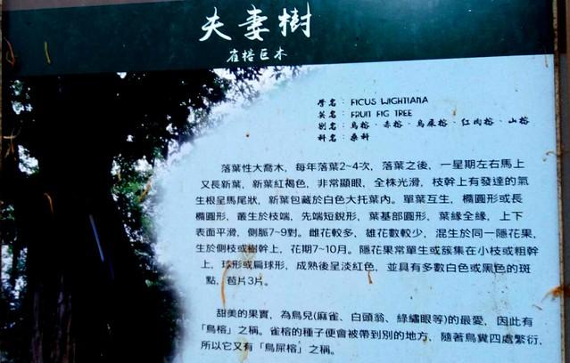 台南五峰山龙湖寺 (15)