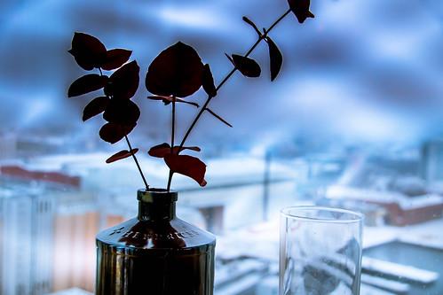 dof glass restaurang malmö restaurant växter malmhattan malmölive malmöliveskybar view skybar sweden depthoffield skånelän sverige se