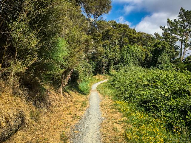 Tongariro River Walk