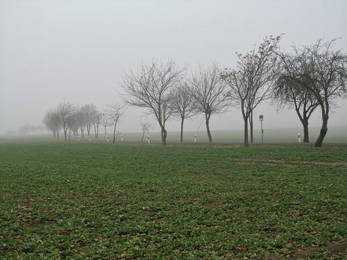 20110316 0203 124 Jakobus Feld Bäume Nebel
