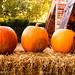 Hampshire in Autumn-14