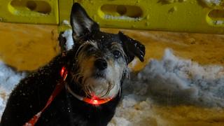 Wer beobachtet mich armen Hund? Mir ist kalt am Hintern! Ich will nach Hause! Dresden Weisser Hirsch 2019 01971