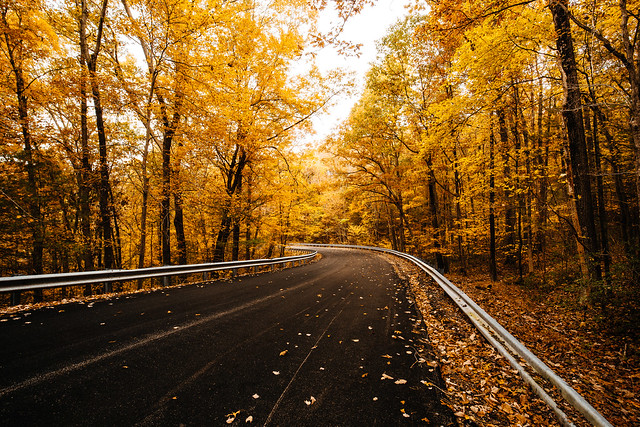 Autumn Road [11.01.18]