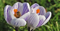 Lente/Spring/Printemps/Primavera    /