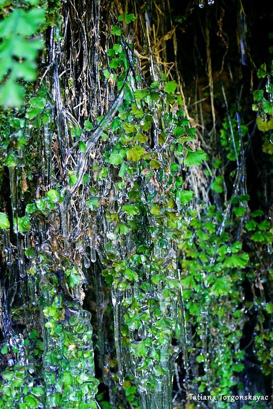 Растения у водопада Провалие