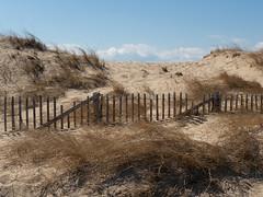 herring cove beach - dune