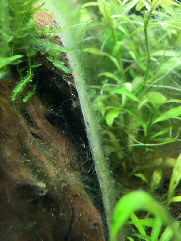 identification des algues 45674934215_e48aa50eff_c