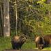 3 big bears 2_DxO