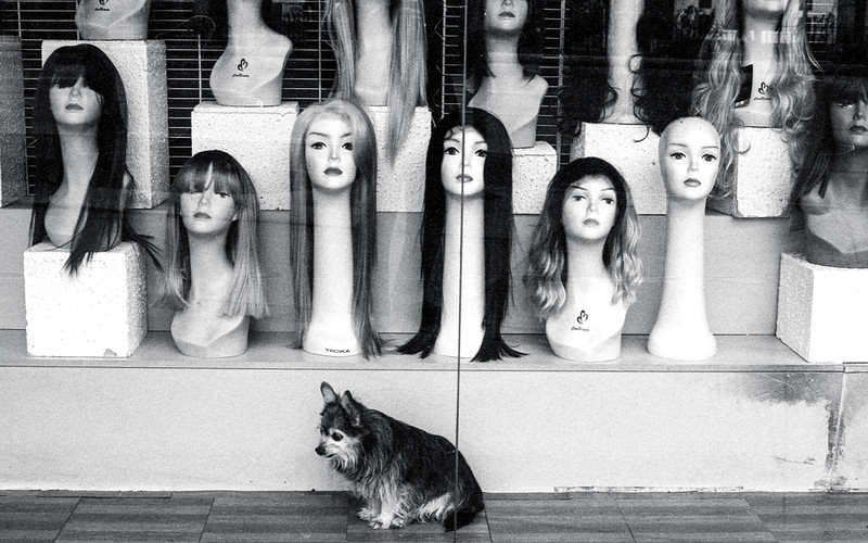 Guard Dog for the Wigs