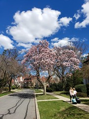 Walking Home From School On A Beautiful Spring Day