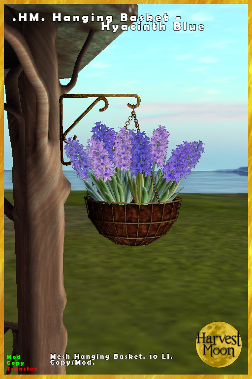 Harvest Moon – Hanging Basket – Hyacinth Blue