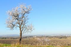 France, les vignes sur la clape avec Narbonne au fond - Photo of Fleury