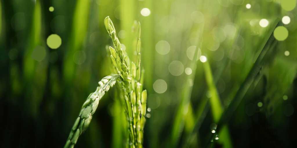 les-plantes-optimisation-gènes