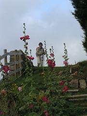 20080901 28999 1002 Jakobus Stockrosen rot ElisabethB Pilger - Photo of Saint-Jean-Soleymieux