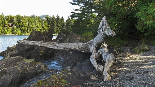 Driftwood on the Wild Pacific Trail near Ucluelet on Vancouver Island, BC, Canada