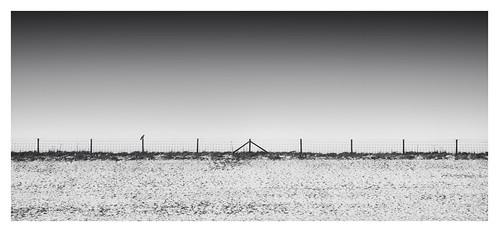 Dutch Polder - The sheep fences