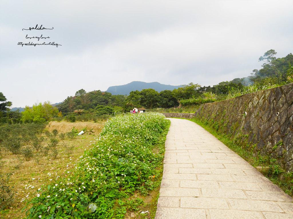台北貓空一日遊踏青親子登山景點推薦樟樹步道 (3)