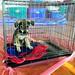 ,, Very Sick Puppy ,, by Jon in Thailand