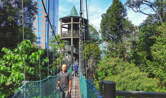 Jay on Canopy Walk