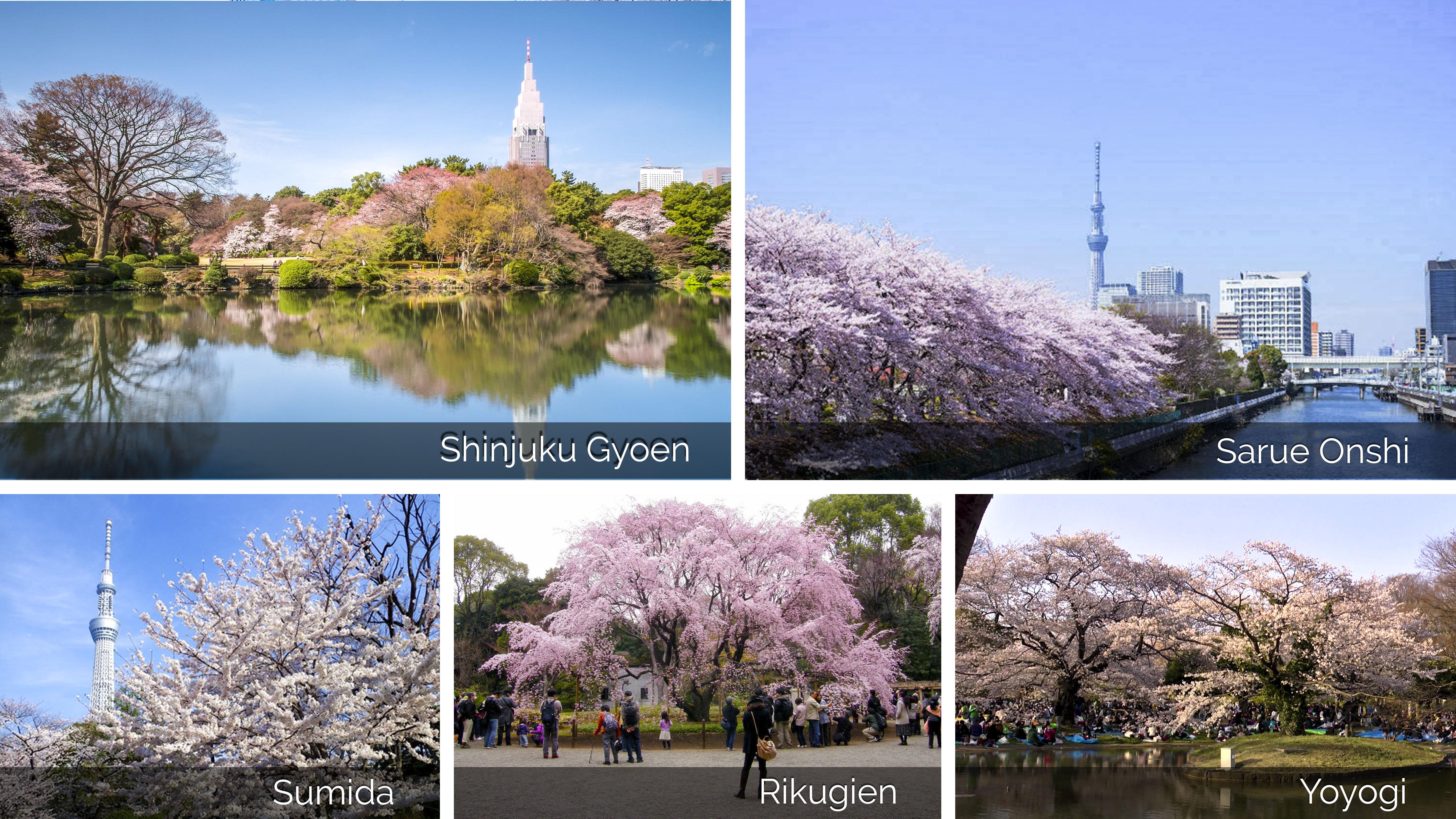 s11 điểm ngắm hoa anh đào nổi tiếng Tokyo-1