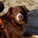 Milo at beach by tmdittrich
