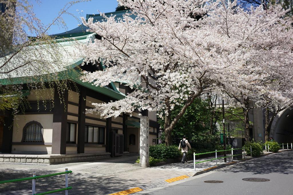 愛宕神社(春)_4