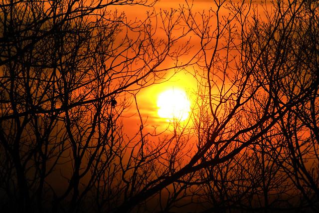 saimyouji-sunset016