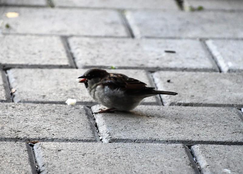Sparrow 17.02 (10)