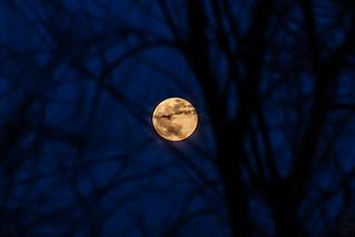 super moon vs. tree / @ 300 mm / 2019-02-19