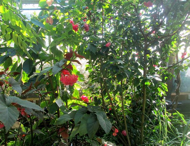 Dundee Botanics greenhouse