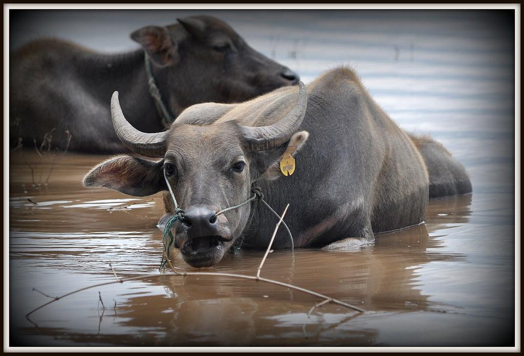 Une salle de bain de luxe......le grand Mekong | Georges ...