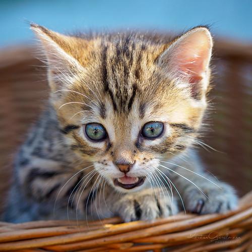 Cat-arazzi alarm !!!