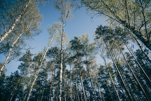 ausflug baum farbe landscape landschaft pflanze wald menschenleer märkischbuchholz brandenburg deutschland