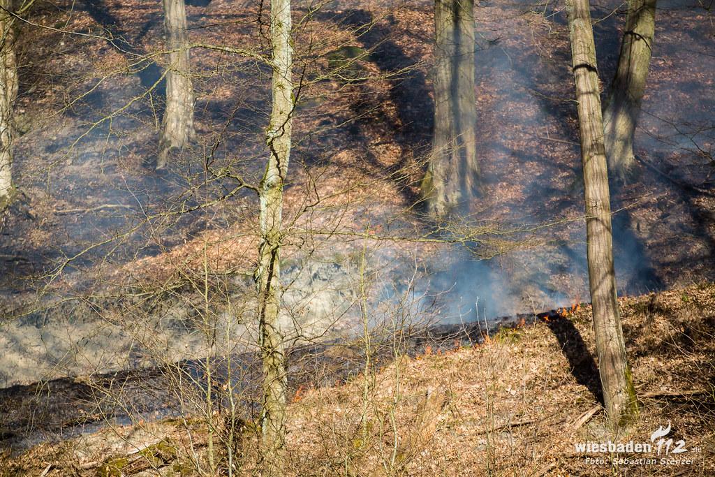 Waldbrand Niedergladbach 25.02.19