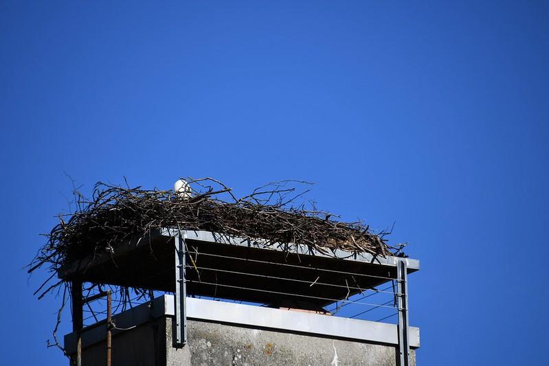 Stork Nest 16.03 (5)
