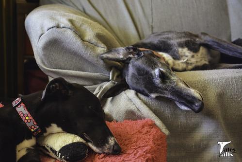 Saturday Snoozers