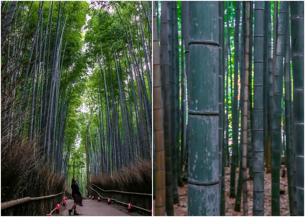 kyoto-arashiyama-bamboo-forest-alexisjetsets