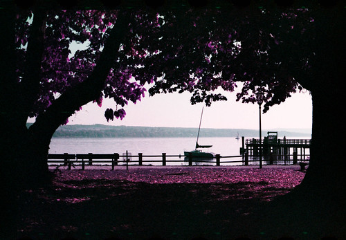 At Ammersee (Lomochrome Purple)