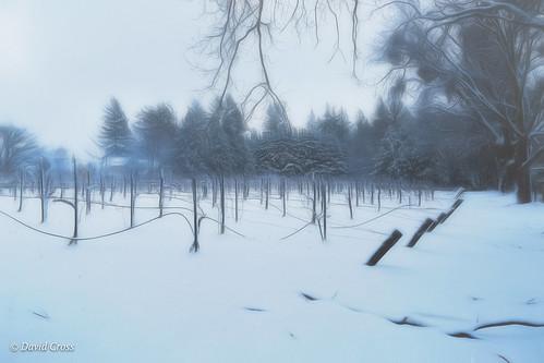 winterscape vineyard landscape nevadacity sierranevadafoothills winterlandscape cementhillroad lightroom6 canonef24105mmf4lisusm topazstudio canon5dmarkiii california nevadacounty winter