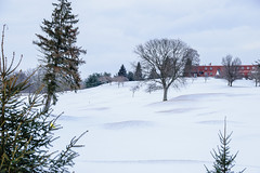Winter on the golf course