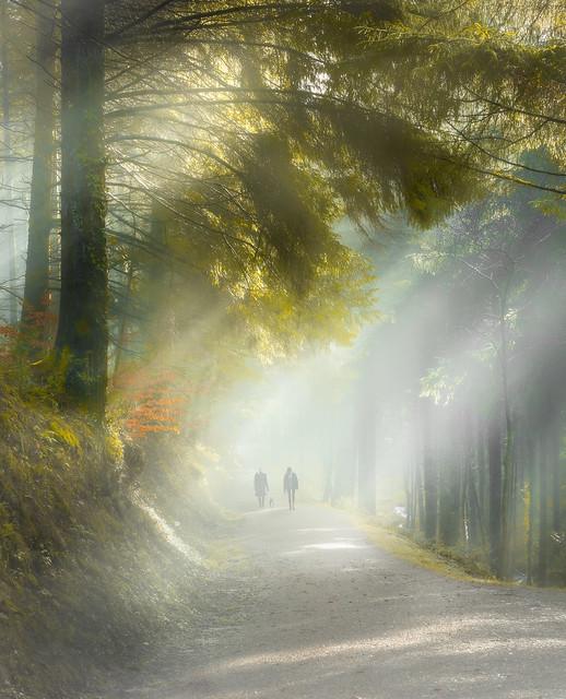 Stroll through Cardinham Woods
