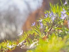 Sunshine Flower Bokeh - 24. März 2019 - Tarbeker Moor - Schleswig-Holstein - Deutschland