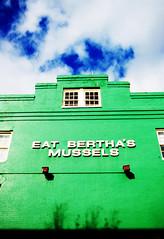 Looking Up - Bertha's