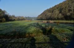 Managed marshland