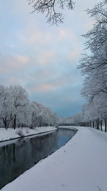 ❄️ White Magic! (Foggy Winter Morning) ☺