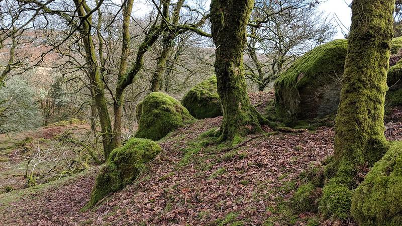 Outcombe Rocks