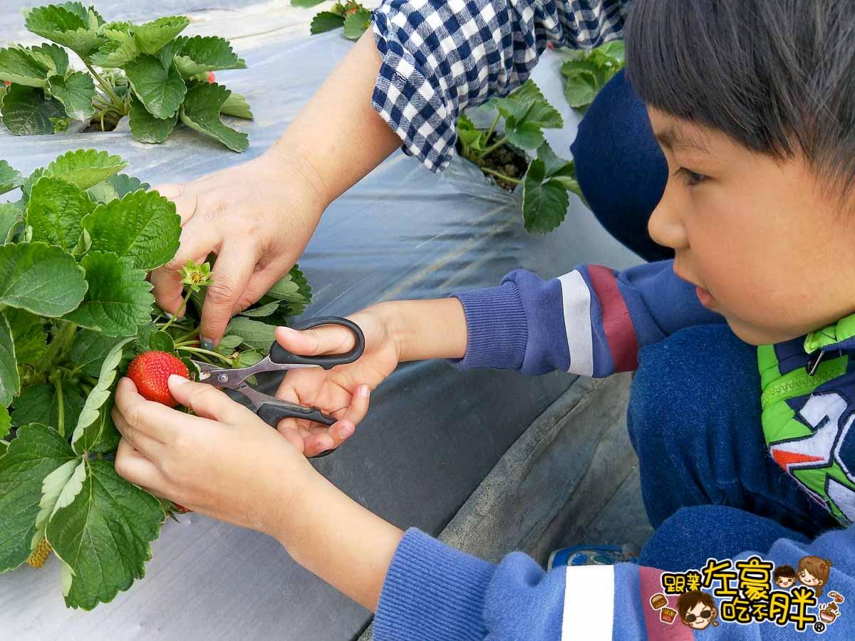 大岡山觀光草莓園-12