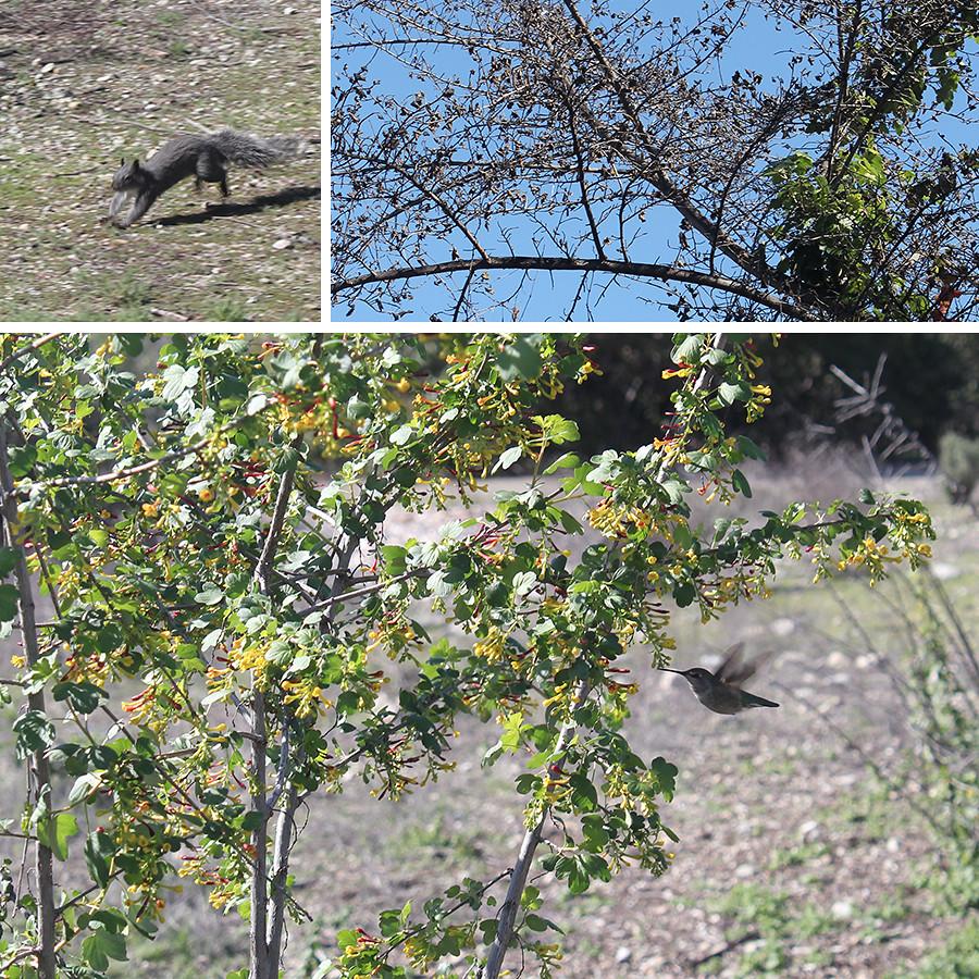 Rancho-Santa-Ana-Botanical-Gardens-Walk-9
